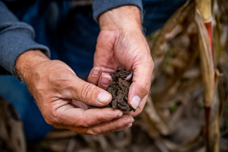 Regenerative agriculture for more sustainable farming